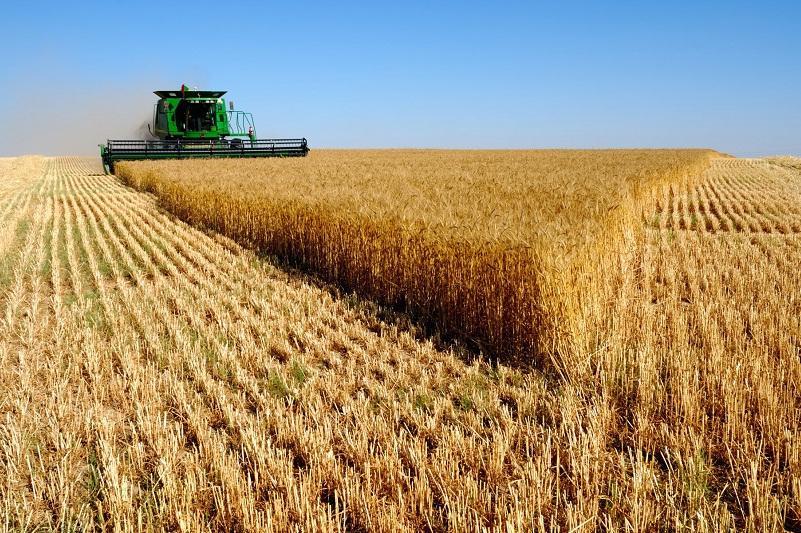 Какой урожай ожидают в Северном Казахстане