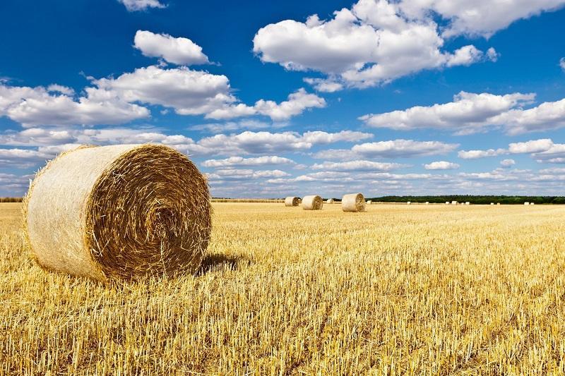 Северо-Казахстанская область должна стать лидером в сельском хозяйстве – аким
