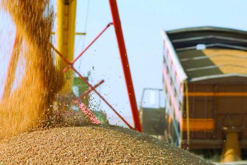 В 2 раза увеличить переработку зерновых намерены в СКО