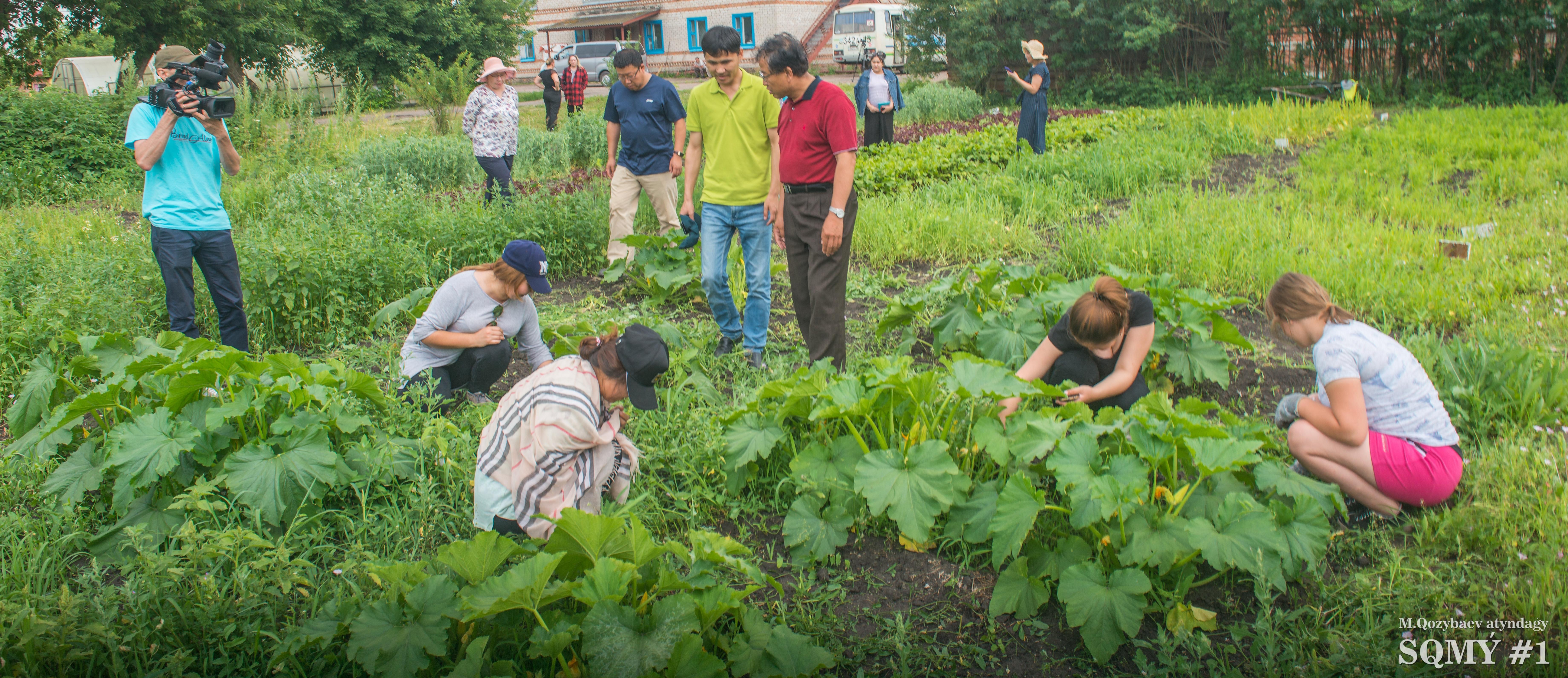 СҚО мен Қытайдың жоғары оқу орны бидай мен картоптың жаңа сұрыптарын зерттеп жатыр