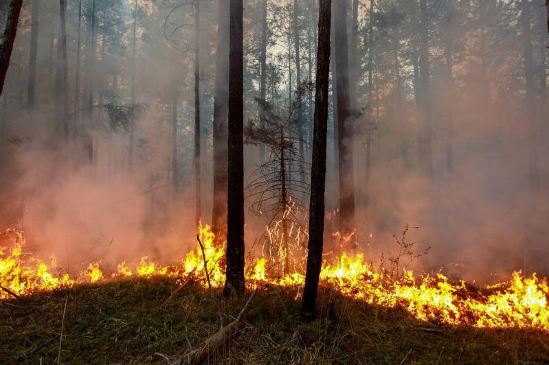 Wildfires sweep through 140,600 hectares in Russian regions