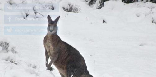 اۆستراليادا 35 جىلدان بەرى العاش رەت قار جاۋدى