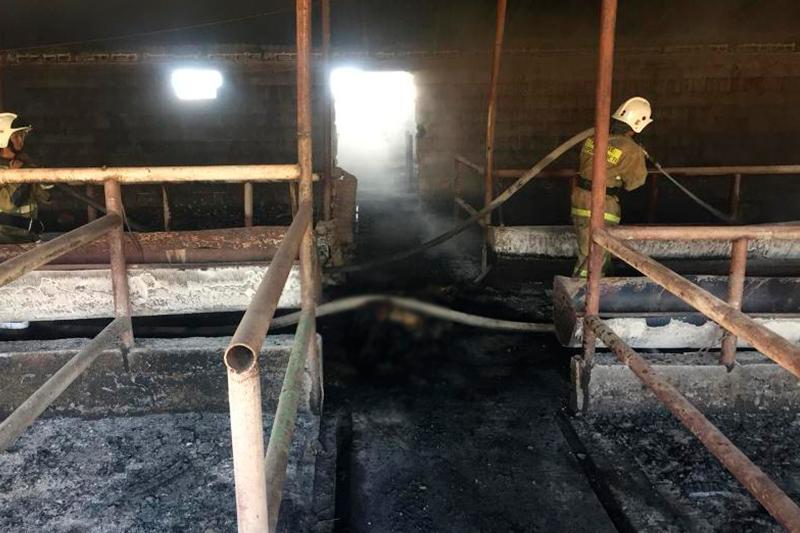 Семь часов тушили пожар на животноводческой ферме в Жамбылской области