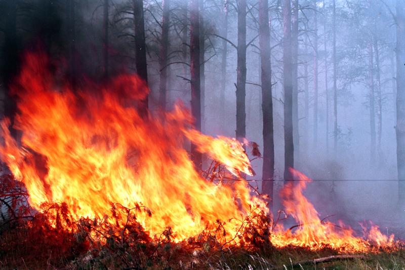 Природные пожары тушат в Жамбылской области