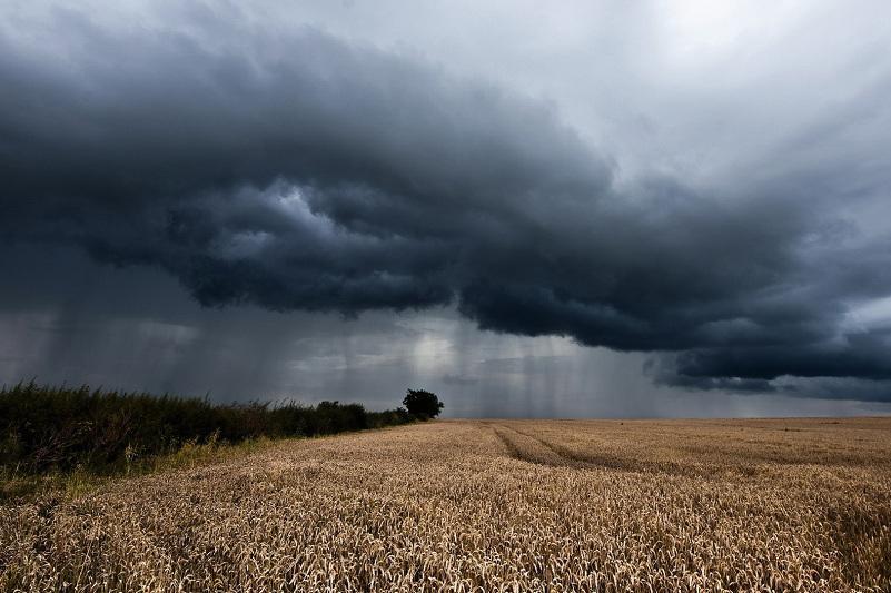 Прогноз погоды на период уборки дали в СКО