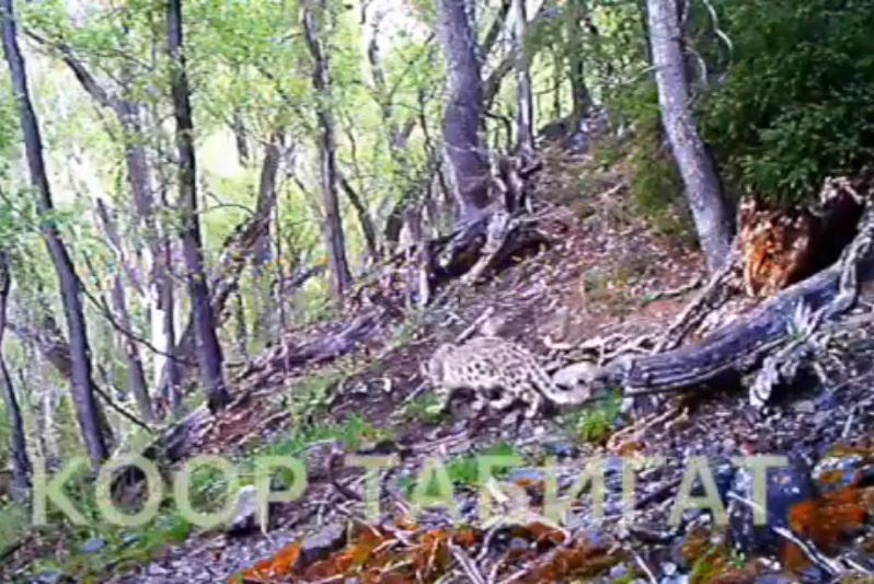 动物学家在阿拉木图山区拍摄到多种稀有动物录像