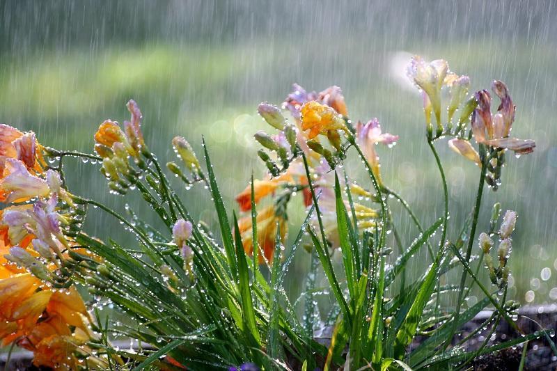 Rains to douse Kazakhstan Aug 16