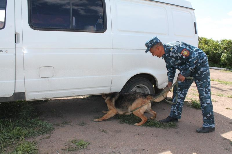 Более 800 преступлений помогли раскрыть служебные собаки в Акмолинской области