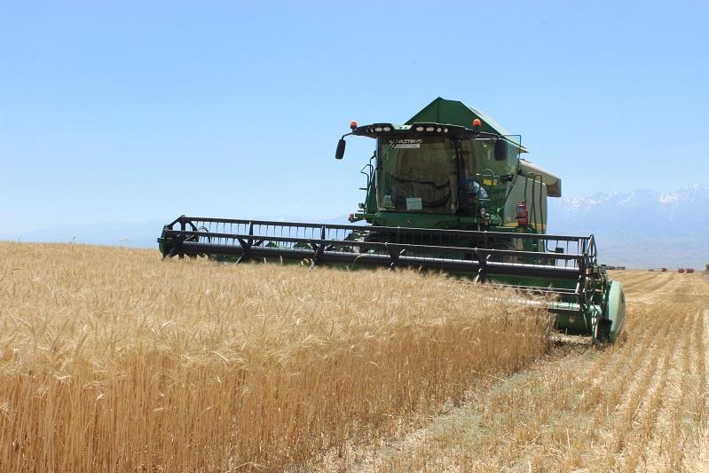 Семь из десяти районов Жамбылской области завершили уборку зерновых