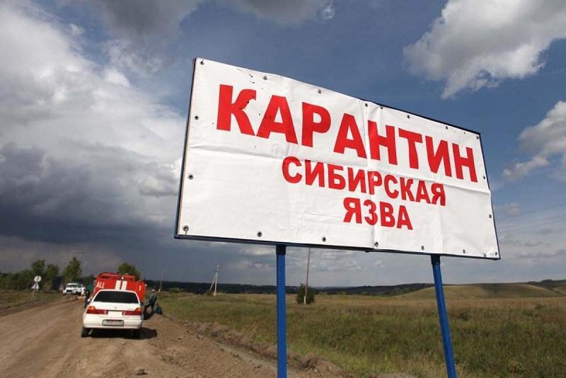 Сибирская язва в Ольгинке: когда снимут карантин