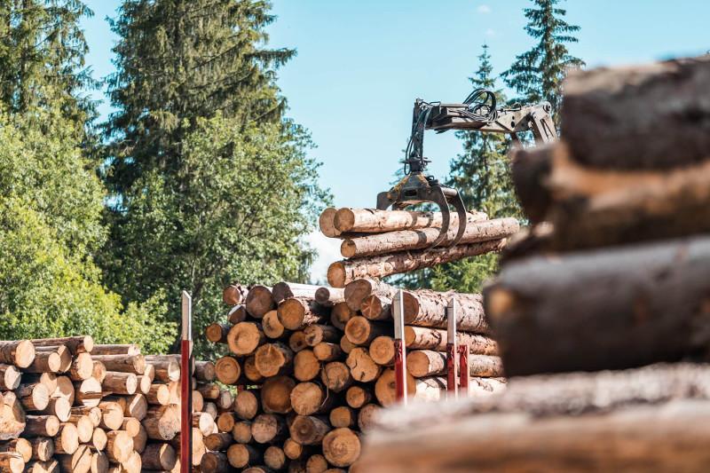 Лесоматериал запретили вывозить из Казахстана