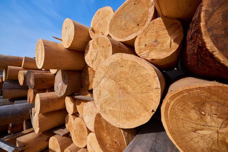 Kazakhstan bans export of timber