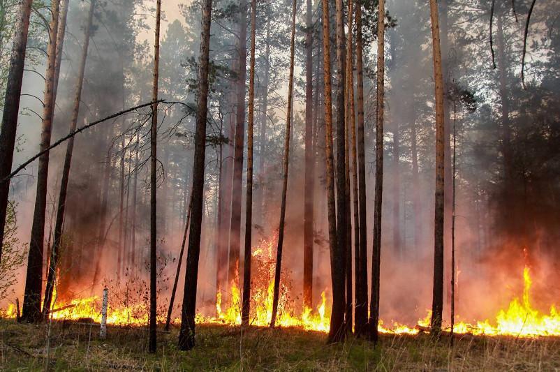 Площадь лесных пожаров в Иркутской области РФ за сутки сократилась до 802 га
