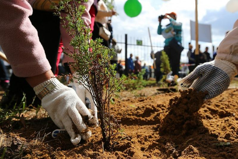 Мастер-план масштабного озеленения появится в Алматы
