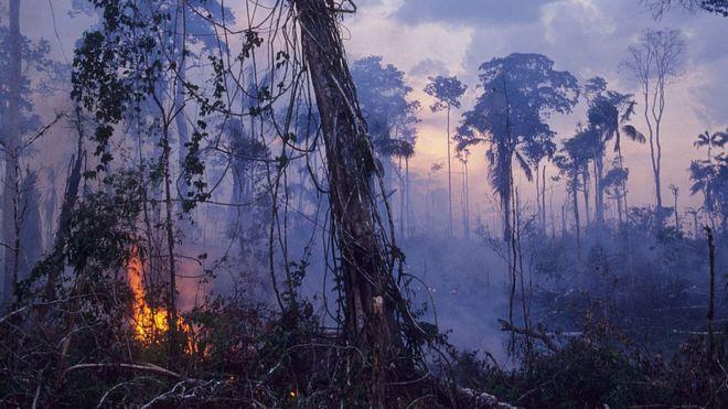 地球之肺在燃烧 亚马逊雨林大火创纪录
