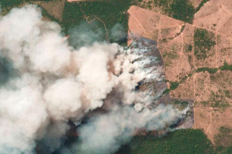 Тропические леса горят в бразильской Амазонии