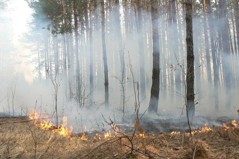 В Костанайской области увеличилось количество лесных пожаров