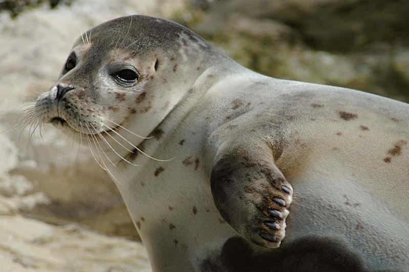В специальном центре в Актау будут изучать и лечить больных тюленей