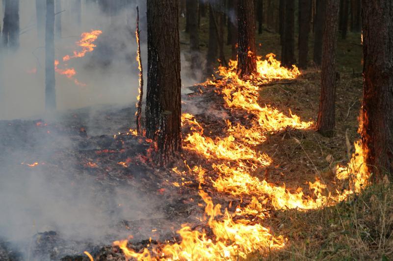 Озвучен размер ущерба от лесных пожаров в Казахстане