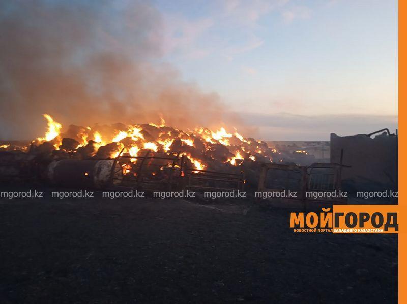 Крупный пожар в ЗКО: погибло более 100 голов скота