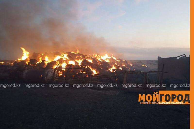 100 head of livestock burnt alive in Atyrau region