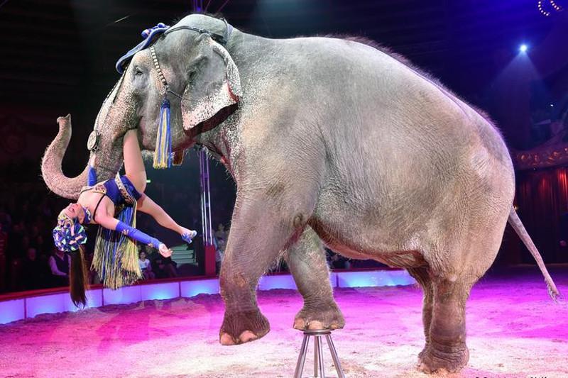 各国投票通过提议:野生非洲象将被禁止送往动物园