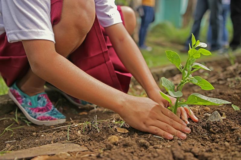 Посадить миллион деревьев в Алматы предложил Бакытжан Сагинтаев