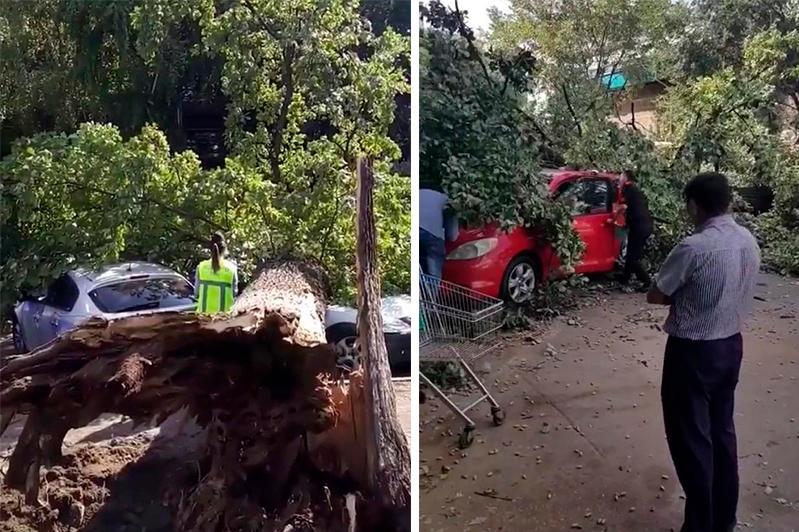 Упавшее дерево повредило 4 автомашины в Алматы