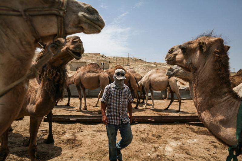 Американское издание рассказало об особенностях казахстанских верблюдов
