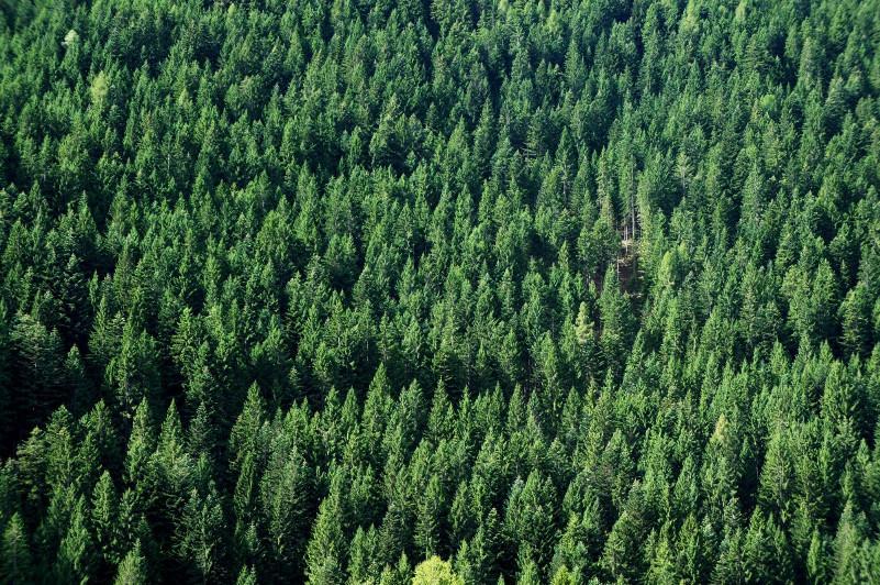 АҚШ жылына 36 миллион түп ағаштан айырылуда
