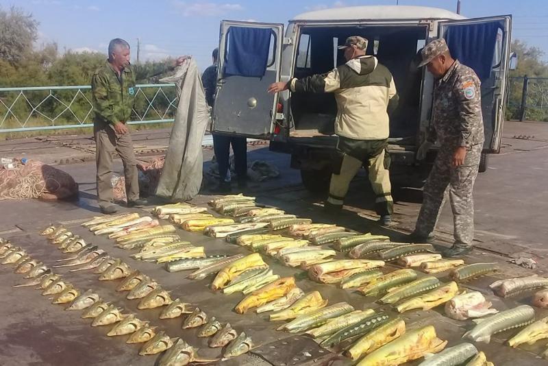 260 келі бекіре балығын аулаған браконьерлер ұсталды