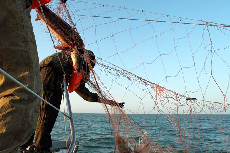 В Атырау прокуратура просит суд пересмотреть решение по браконьерам