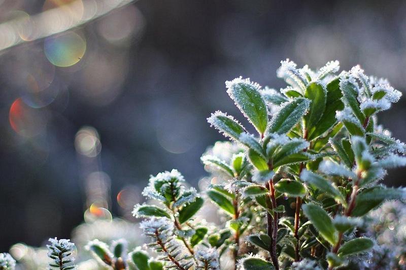 天气:未来3天北部地区将出现地霜