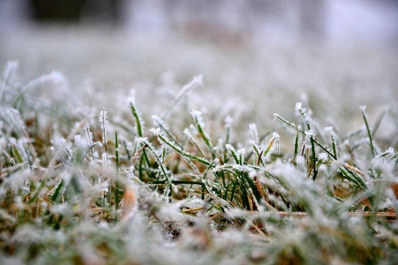 В четырех областях Казахстана 12 сентября ожидаются заморозки