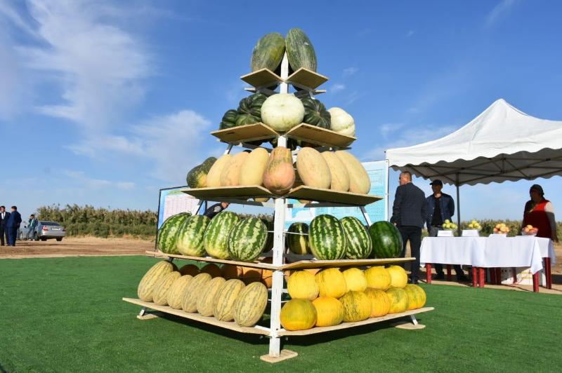 Туркестанские крестьяне могут собирать урожай 2-3 раза в год - Умирзак Шукеев
