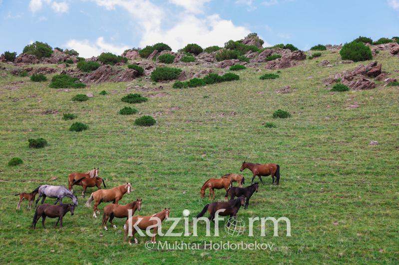Kazakhstan uses only 40% of pasture lands – Head of State