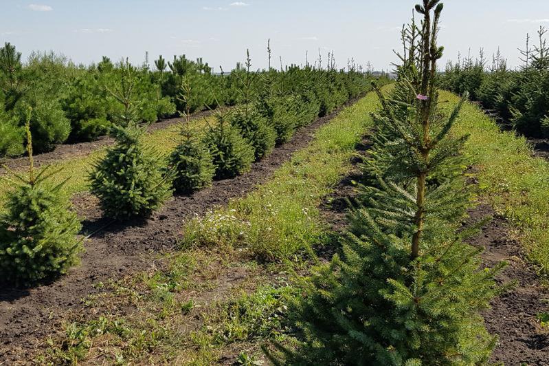 Более 2,5 тыс. гектар озеленила Акмолинская область на окраинах столицы