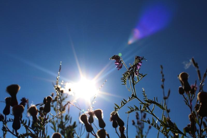 На юге и востоке Казахстана ожидаются жаркие выходные