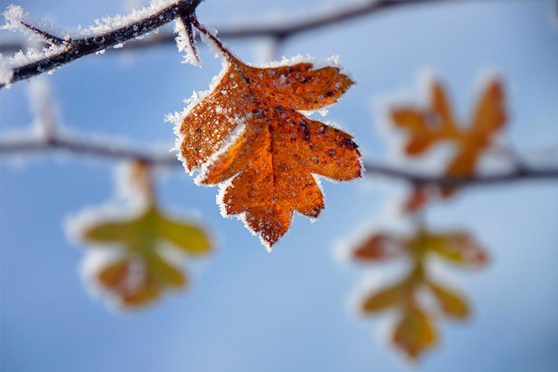Заморозки ожидаются в Акмолинской, Костанайской и Северо-Казахстанской областях