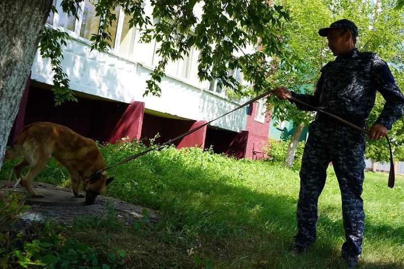 Синтетические наркотики учат искать служебных собак в СКО