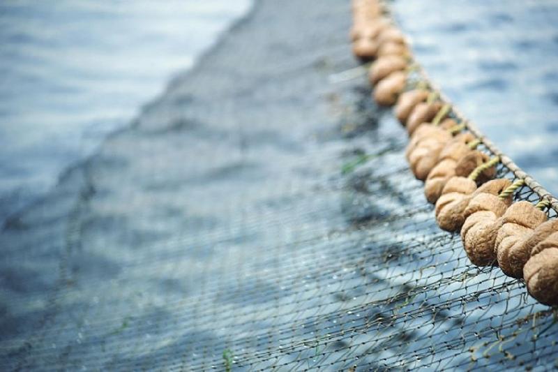 Более 2,5 км сетей установили браконьеры на озере Копа в Кокшетау