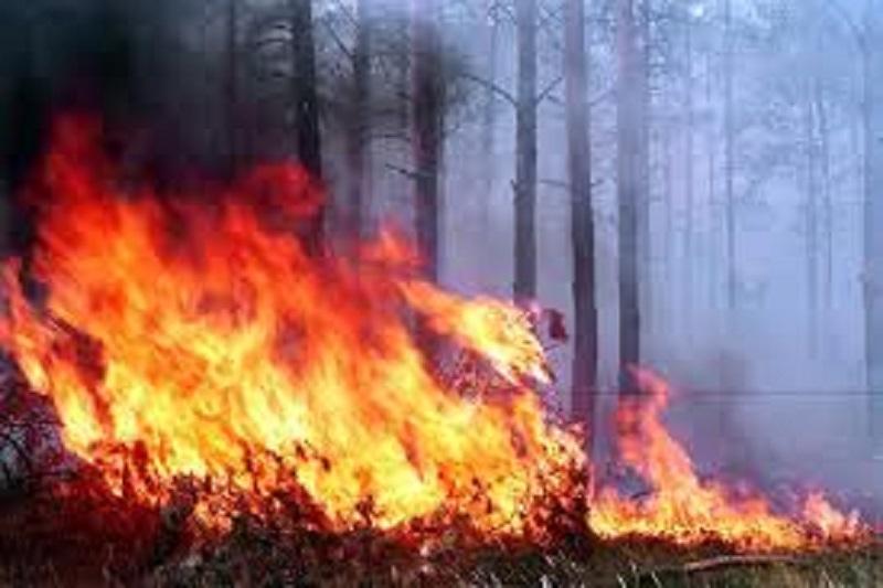 В Баянаульском нацпарке тушат пожар с привлечением сил из ВКО