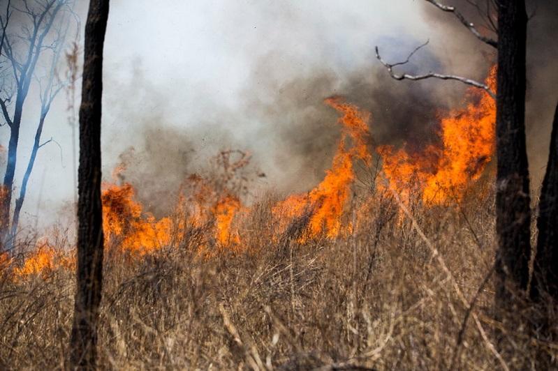 КЧС: В минувшее воскресенье произошло 24 природных пожара