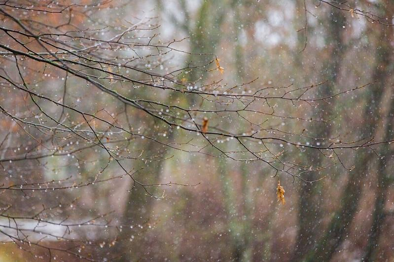 Мокрый снег идет в Акмолинской области