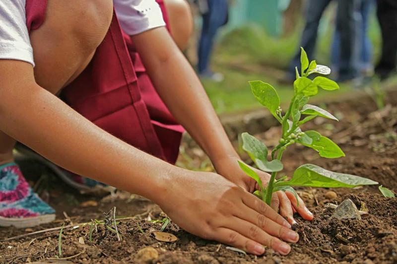 今年我国将种植一百万棵树