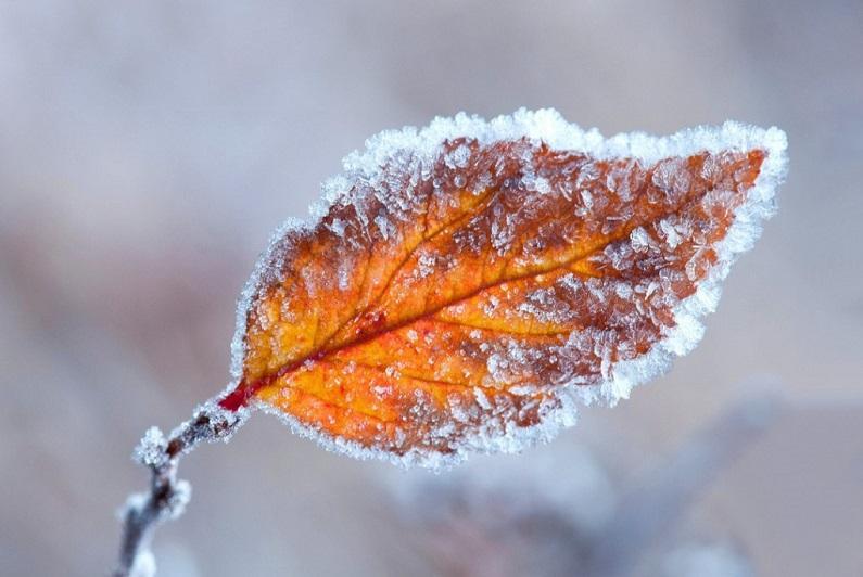 Ground frost forecast in Kyzylorda region