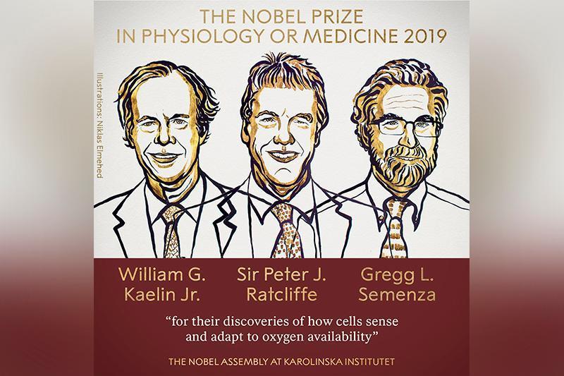 2019年诺贝尔生理学或医学奖揭晓