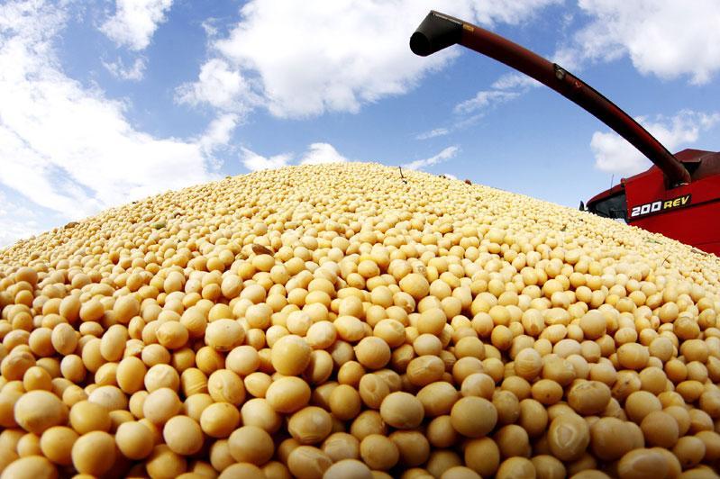 Первый урожай сои получили аграрии Северного Казахстана