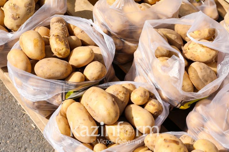Павлодар облысында картоптың келісі алқапта 45-55 теңгеден сатылады