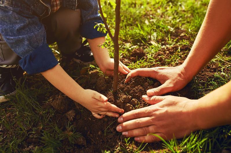 Алматыда 139 мың ағаш отырғызылады